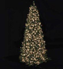 Christmas Tree Lighting.Christmas Tree Lighting